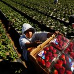 California Strawberry Festival canceled for second year in a row because of COVID-19