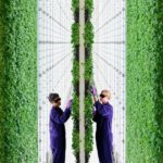 Hydroponics is a growing industry