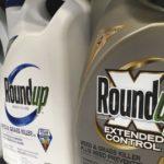 Court upholds $25-million Roundup verdict against Monsanto